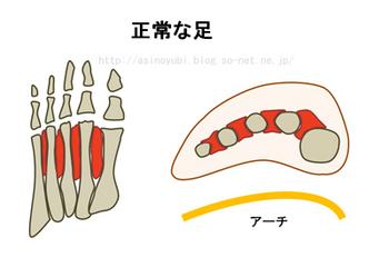 正常な足の構造